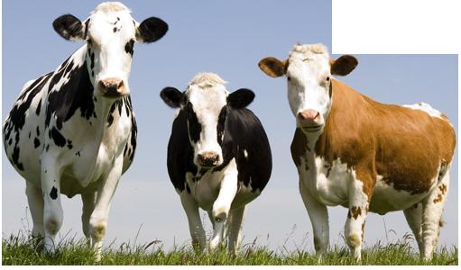 Haller Livestock